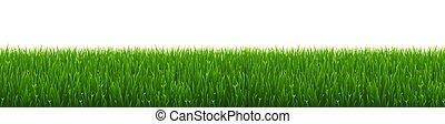 verde bianco, erba, bordo, fondo