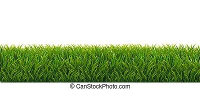 verde bianco, erba, fondo, bordo