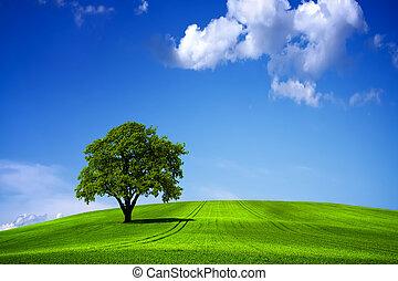 verde blu, cielo, paesaggio, natura