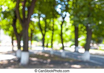 verde, cadere, vicolo, fondo, albero, città
