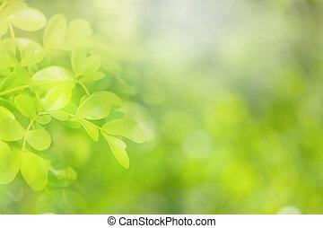verde, fondo., naturale, fuoco molle