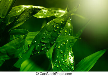 verde, gocce, foglia