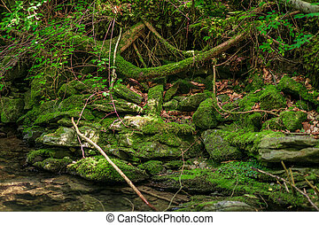 verde, muschio, flusso, pietre