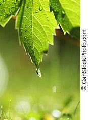 verde, sopra, erba, foglia, bagnato
