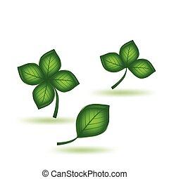 verde, vettore, set, leaf.