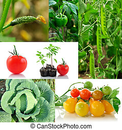 verdura, collage