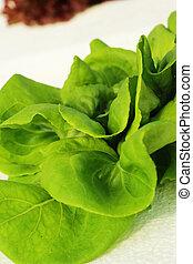 verdura, farm., insalata verde, hydroponic