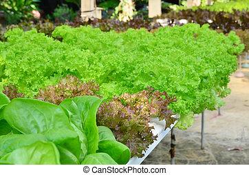 verdura, fattoria, hydroponic
