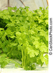 verdura, fattoria, verde, hydroponic