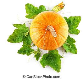verdura, foglie, verde, giallo, zucca