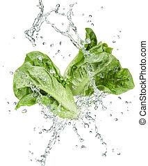 verdura, freschezza