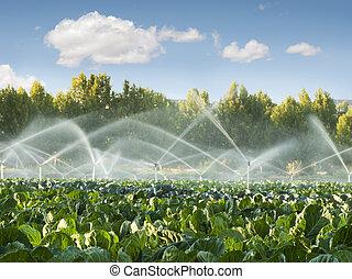 verdura, irrigazione, giardino, sistemi