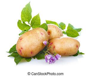 verdura, patate, foglie, isolato, mucchio, maturo, verde