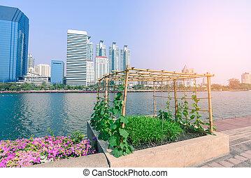 verdura, piantagione, garden., urbano
