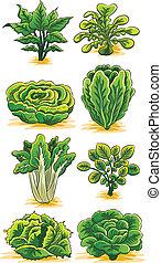 verdura, verde, collezione