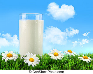 vetro, erba, margherite, latte