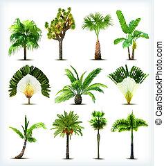 vettore, alberi., set, palma, vario