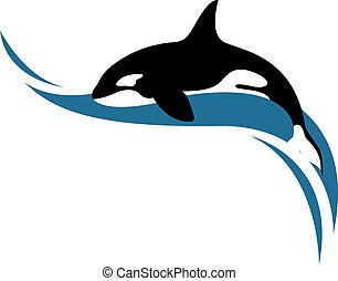 vettore, balena, assassino, bianco, fondo., illustrazione