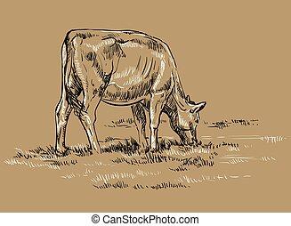 vettore, disegno, mucca, mano
