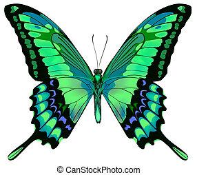 vettore, fondo, farfalla, bello, isolato, bianco, verde blu, illustrazione