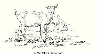 vettore, goat, mano, disegno