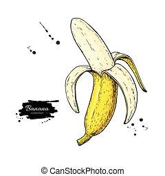 vettore, mano, drawing., isolato, disegnato, oggetto, bianco, buccia, banana