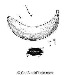 vettore, mano, isolato, disegnato, oggetto, backg bianco, drawing., banana