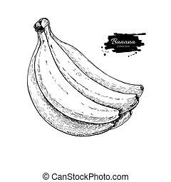 vettore, mano, isolato, disegnato, oggetto, bianco, mazzo, drawing., banana