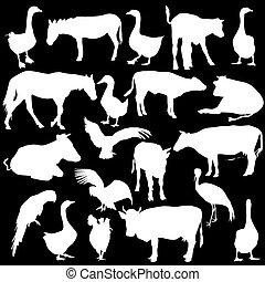 vettore, nero, animali, zoo, set, bianco, silhouette, collezione, illustration., fondo.