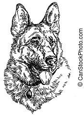 vettore, pastore, disegno, tedesco, mano, illustrazione