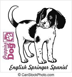 vettore, spaniel, disegno, più primaverile, bianco, inglese, incisione, image., nero, sketch., stile, puppy., mano
