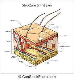 vettore, struttura, illustrazione, pelle