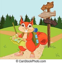 viaggiatore, tracciato, scoiattolo, segue