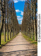 viale, parco, albero