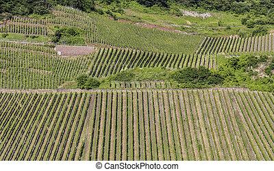 vigne, moselle, estate, fiume, verde