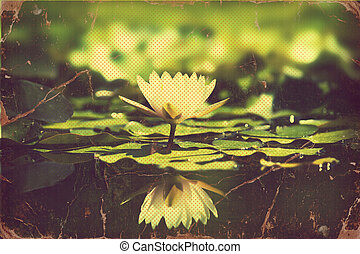 .vintage, fiori, waterlily, scheda, stagno