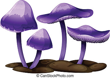 viola, funghi