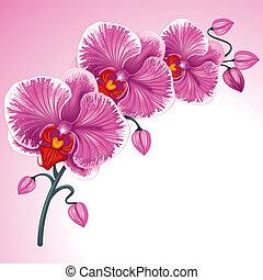 viola, orchidea