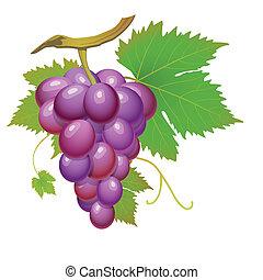 viola, uva
