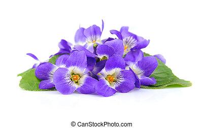 violette, fiori
