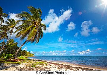 vista, arte, fondo, bello, spiaggia