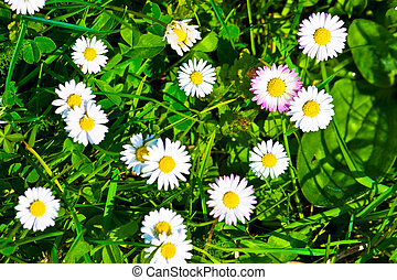 vista, fondo, fiori, cima verde, erba