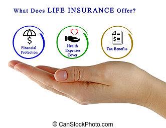 vita, offer?, cosa, assicurazione