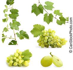 vite, collage, foglie, uve bianche
