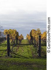 viti, 06, autunno