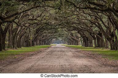 vivere, attraverso, quercia, tunnel, strada, albero, sporcizia
