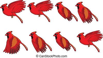 volare, animazione, cardinale, uccello