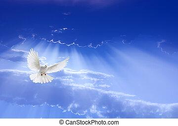 volare, cielo, colomba, bianco