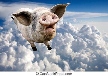 volare, maiale