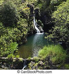 waterfall., lussureggiante